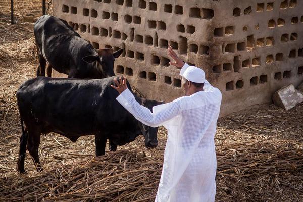 Buhari Farm 3