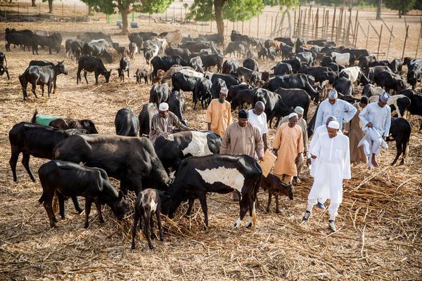 Buhari farm 1