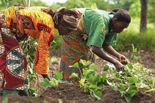 African-women-farmers