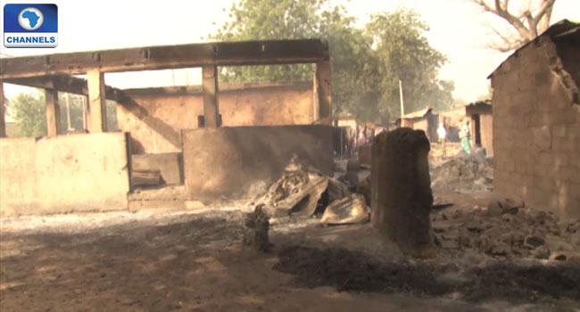 Dalori Borno 7