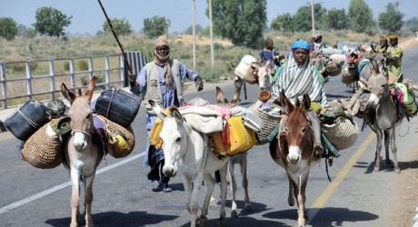 25 Herdsmen Suspected To Be Robbers And Kidnappers Arrested
