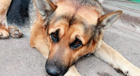 Man Who Named His Dog After Nigeria's President Buhari Sent To Prison